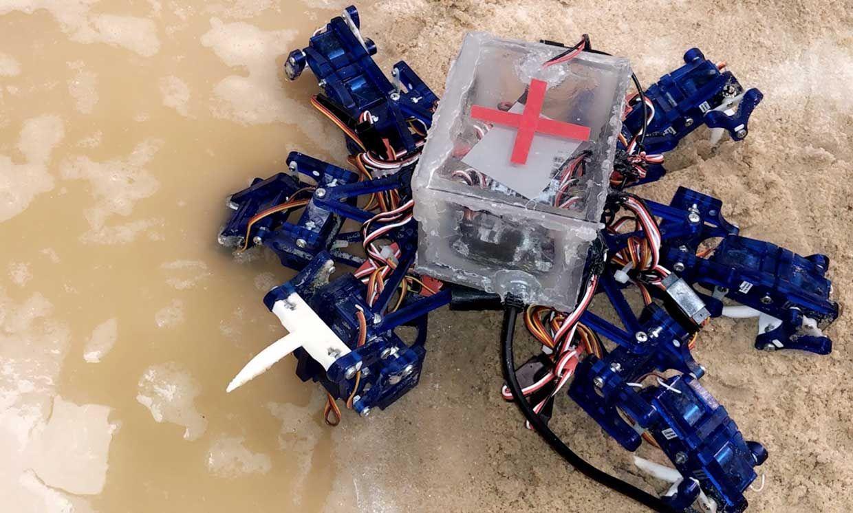 Photo of a robot crab