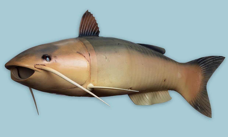 Photo of a robot catfish