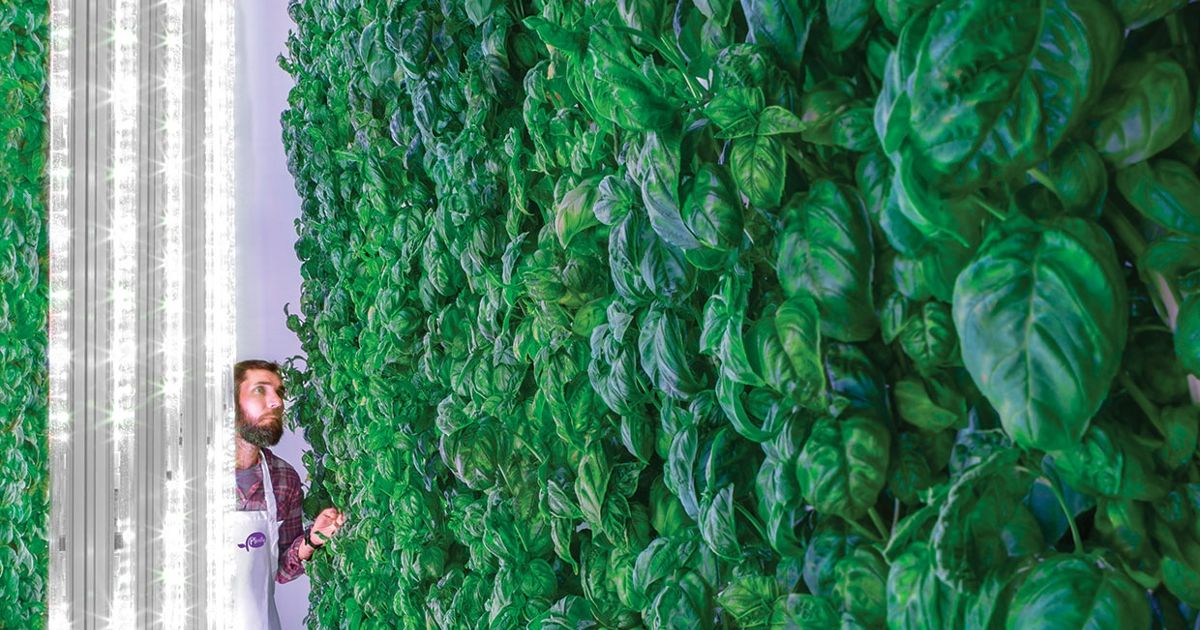 The Green Promise Of Vertical Farms Ieee Spectrum