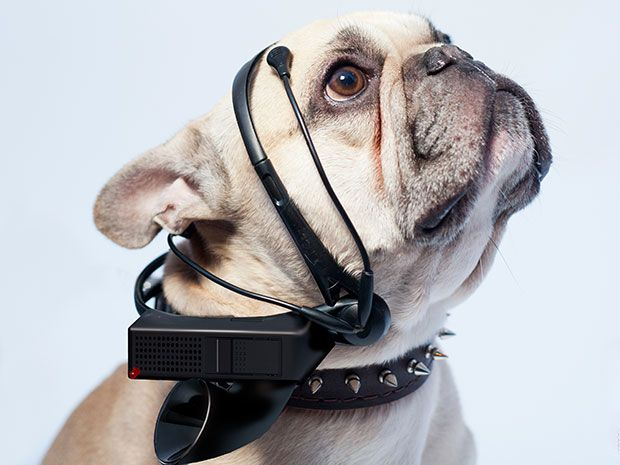 Publicity photo shows a dog wearing the No More Woof headset