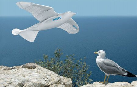 Bionic and Traditional Seagull