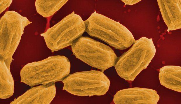 споры бактерий фото посчитаем, сколько