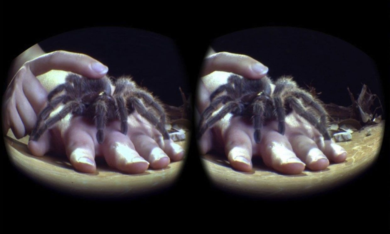 View through virtual reality headset of a Chilean rose hair tarantula on a participant's hand.