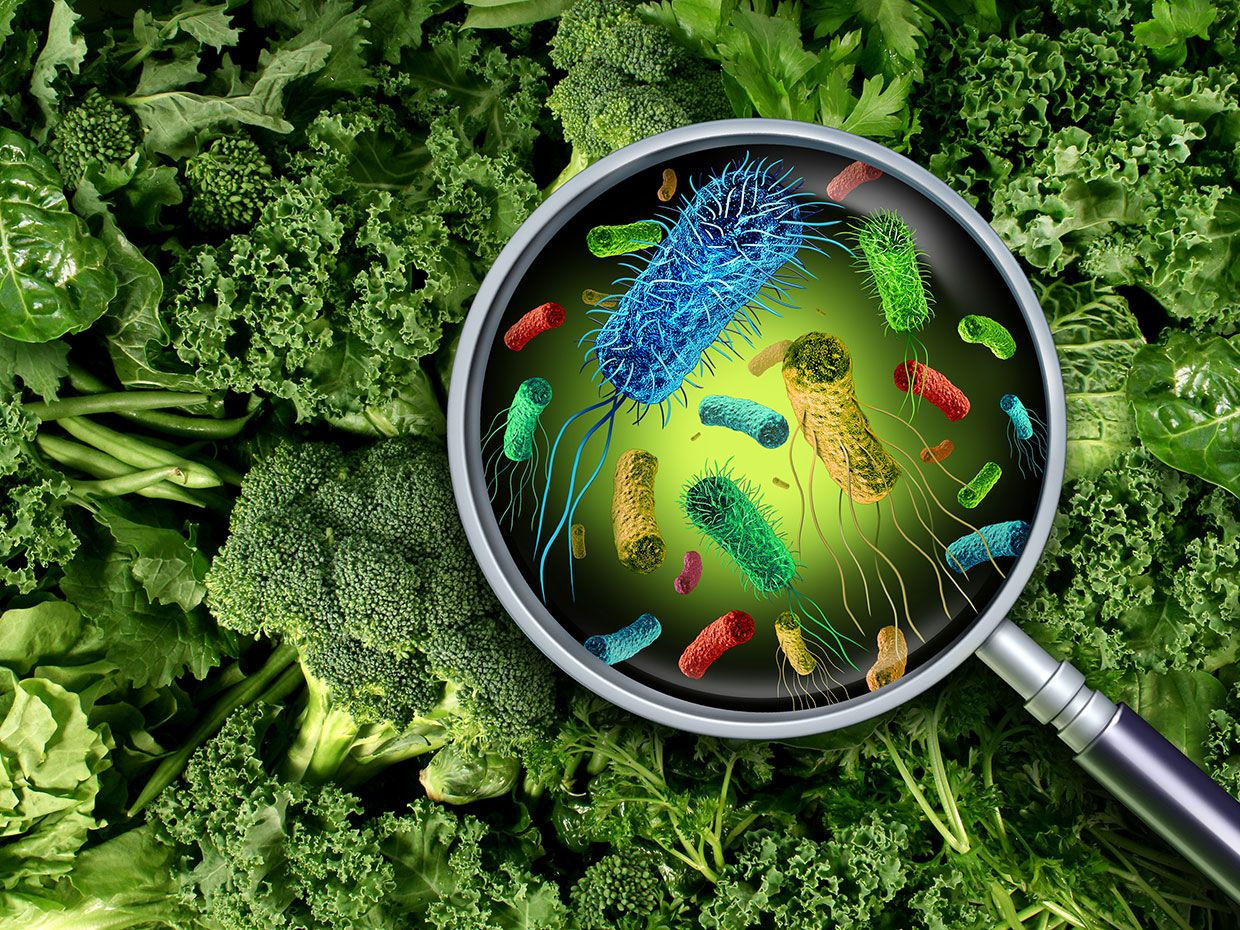 Photo illustration of a magnifying glass over some vegetables showing bacteria.