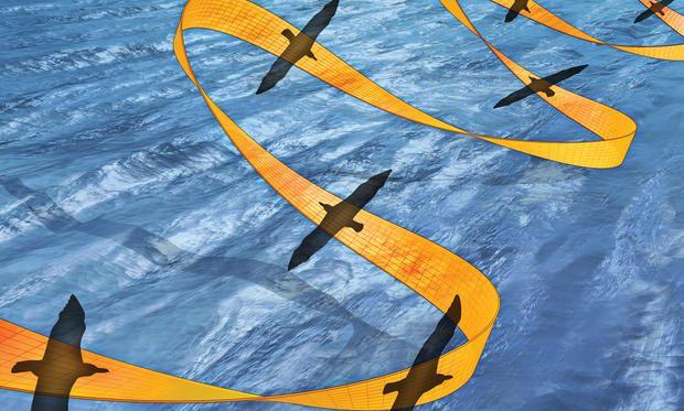 The Nearly Effortless Flight Of The Albatross - IEEE Spectrum