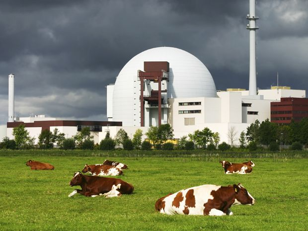 cows in front of nuclear plant