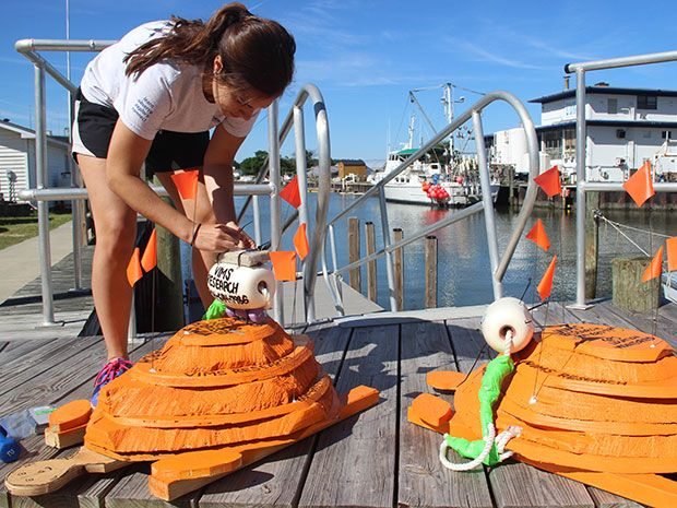 A woman attaches GPS buoys to wooden sea turtle replicas.