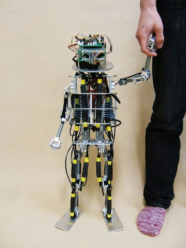 The Pneuborn-13 is an infant-size musculoskeletal robot driven by pneumatic actuators. Built by Osaka University roboticists, it's learning to crawl, stand, and walk. It feeds on compressed air.