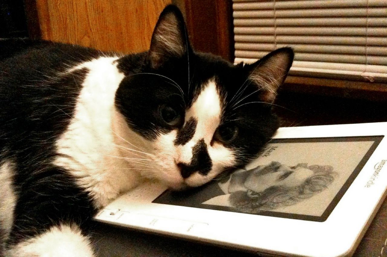 """<i>Your</i> Kindle? I think not"": Comma the Cat."