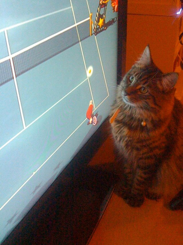 """I play Wii now?"": Chewbacca the Cat."