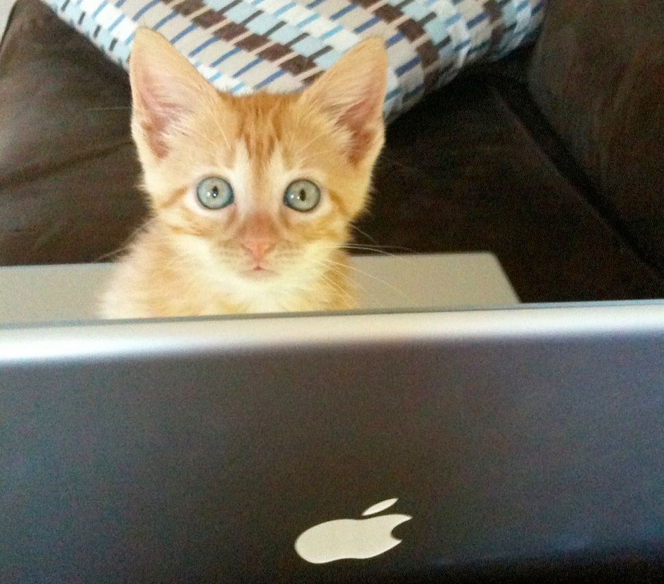 """I can haz Apple?"": Edwin the Cat."