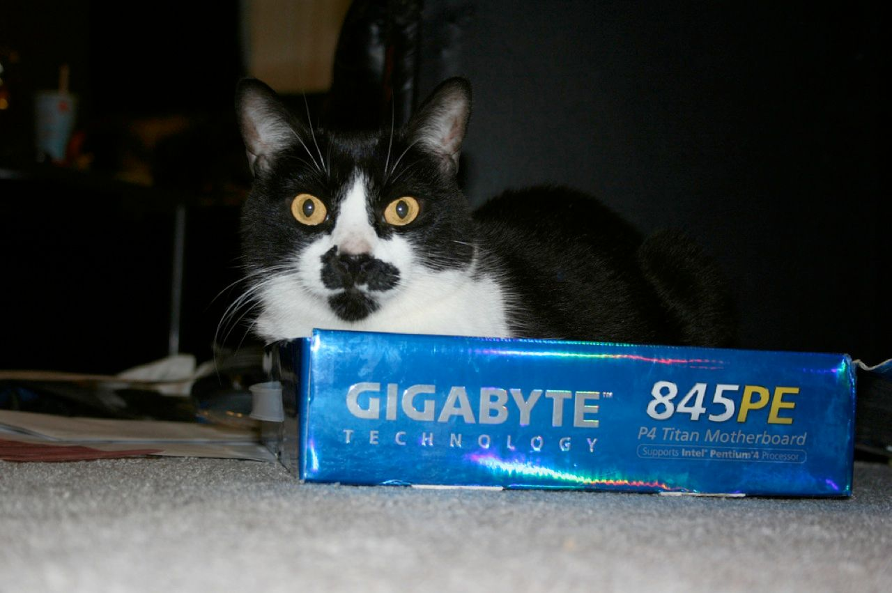 """I eat gigabytes for breakfast. Nom nom nom"": Moustachio the Cat."