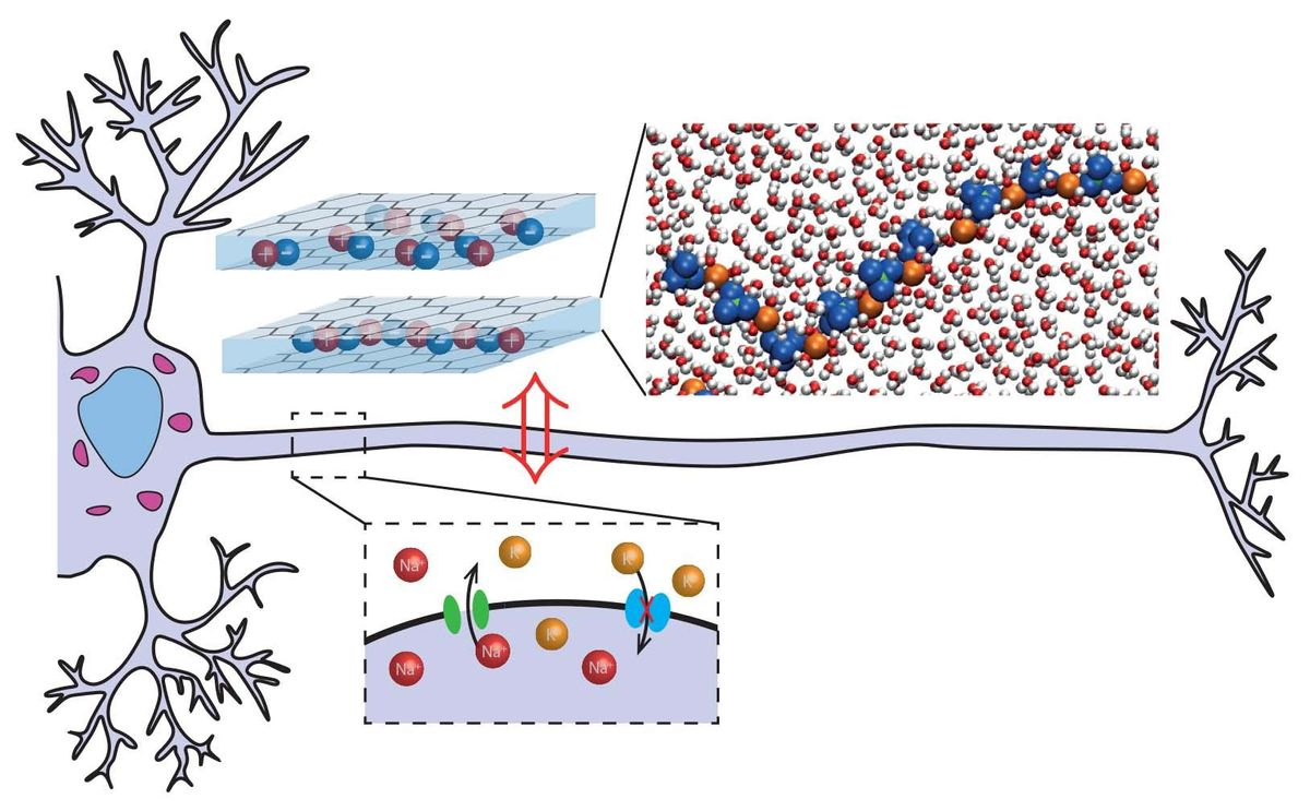 Nanofluidic slits in this artificial neuron prototype mimic the ion channels in the brain.