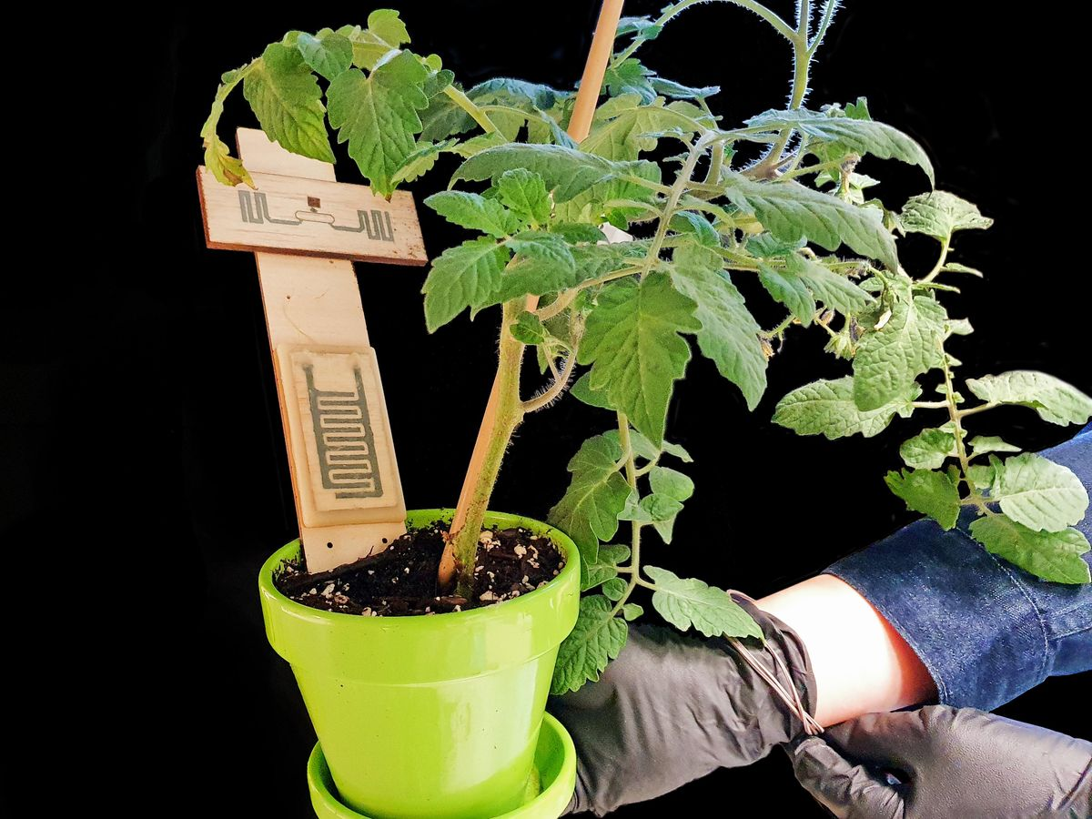 Hands wearing a blue shirt and black gloves hold a green planter filled with soil. A green leafy plant grows from the soil. A wood object in the shape of a cross, with grey circuitry on it, protrudes from the soil.