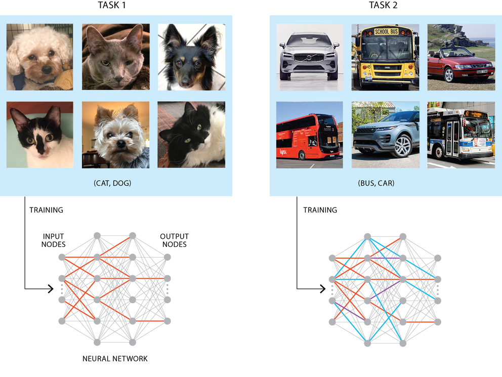 Infographic of a neural network working to determine if the image is a cat or dog.