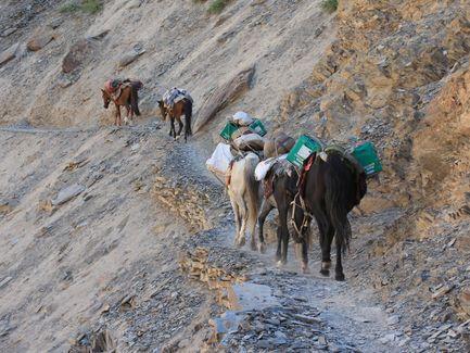 Donkeys carrying packs walk along a narrow mountain road