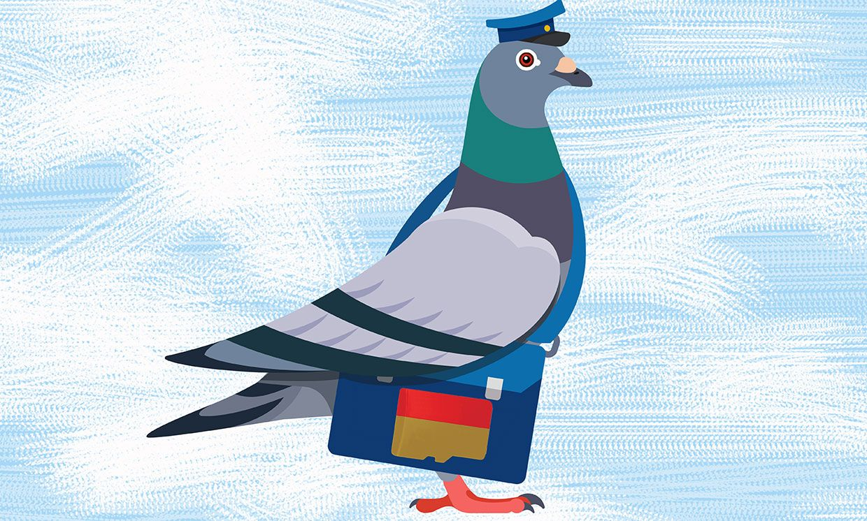 Illustration of a carrier pigeon with a bag that has an SD card shape on it.