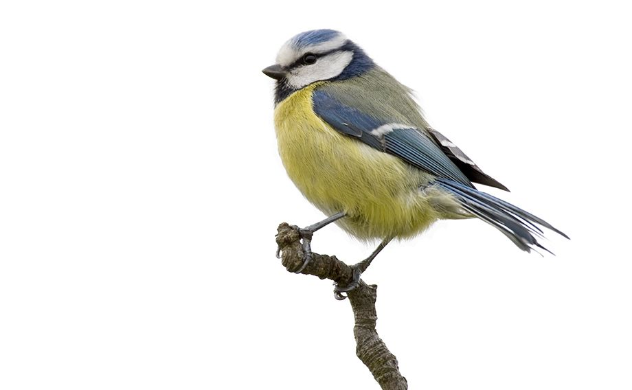 Image of a bird gripping a branch