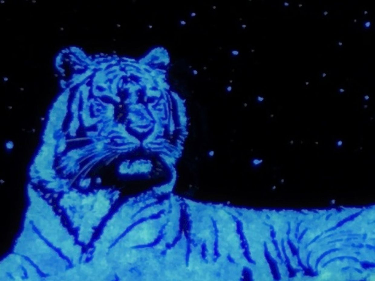 Image of a Tiger to help illustrate VueReal's 4K micro-LED array at 6000 pp