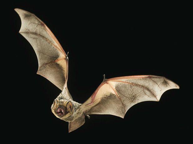 Fixing Wind Power's Bat Problem