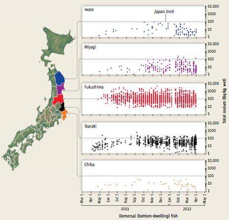 Fukushima Fish Still Radioactive