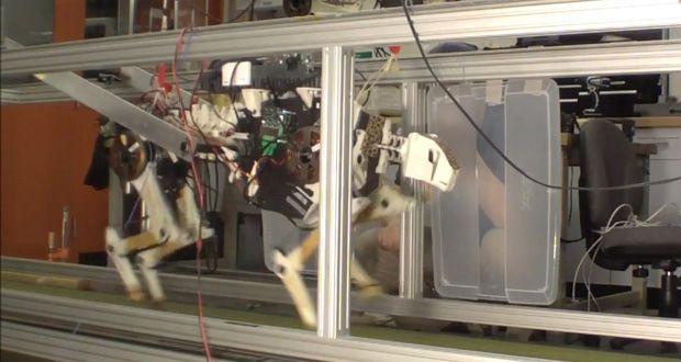 MIT Cheetah Robot Runs Fast, and Efficiently
