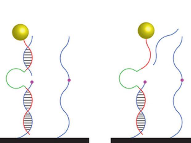 DNA Motor Transports Cargo Along Carbon Nanotube