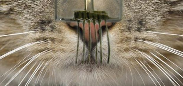 Next Generation Robotic Whiskers Promise New Capabilities, More Cuteness