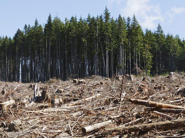 Google Earth Engine Brings Big Data to Environmental Activism