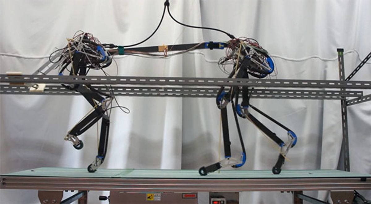 Quadruped Robot Pneupard Takes Its First Steps