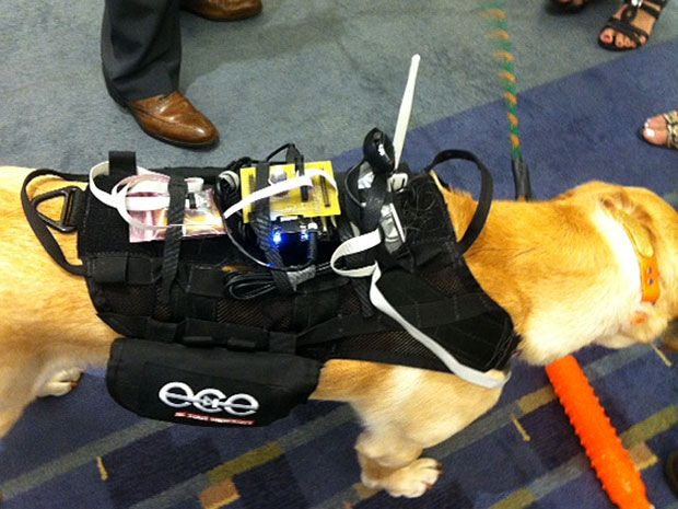 On the Internet of Things, Nobody Knows You're a Dog