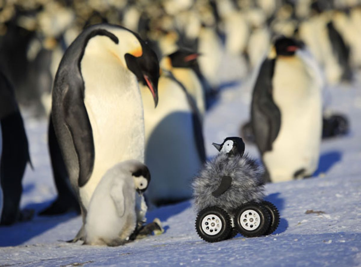 Fluffy Little Rovers Are an Effective, Adorable Way of Monitoring Penguins