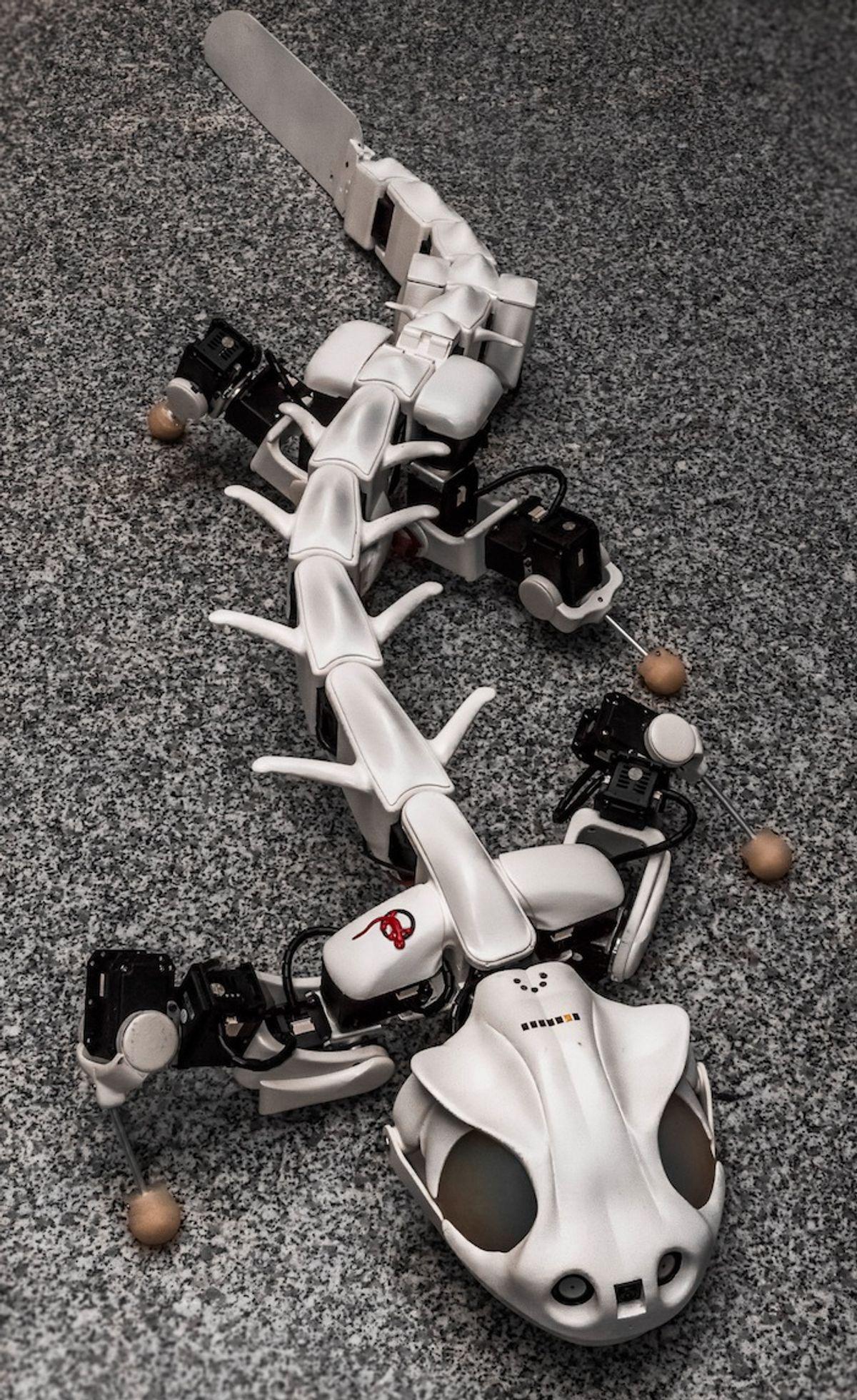 Pleurobot Is an Eerily Lifelike Robotic Salamander