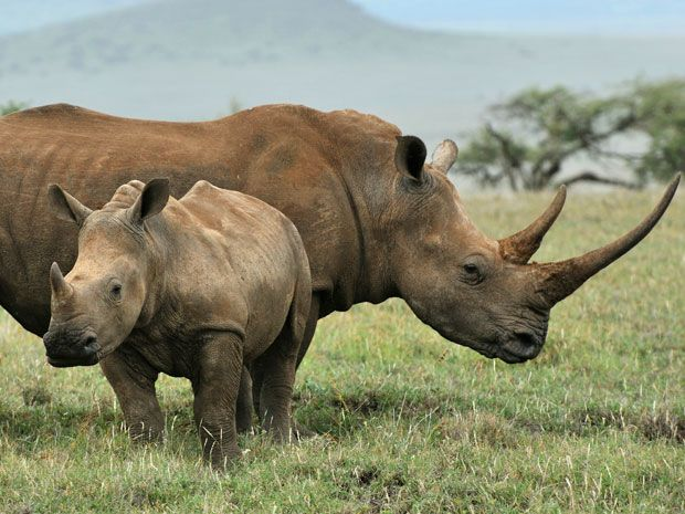 Biotech and 3-D Printing Could Make Rhino Poaching Pointless
