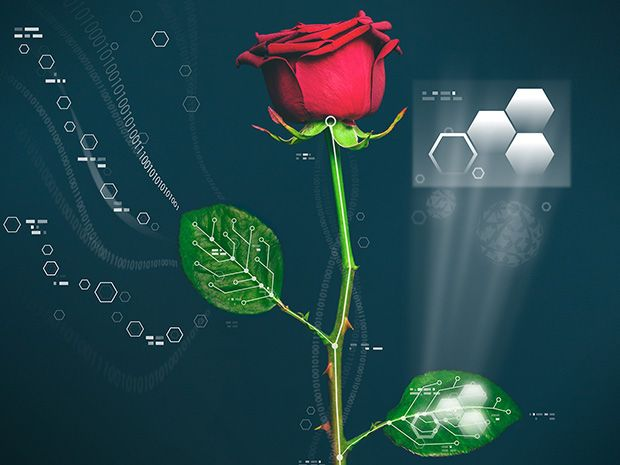 Rewired Rose Plant Becomes Living Cyborg