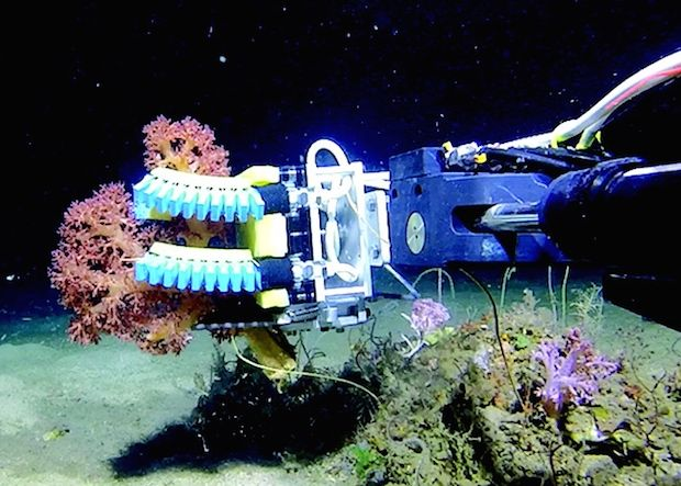 Squishy Robot Fingers Gently Tickle Deep Sea Critters