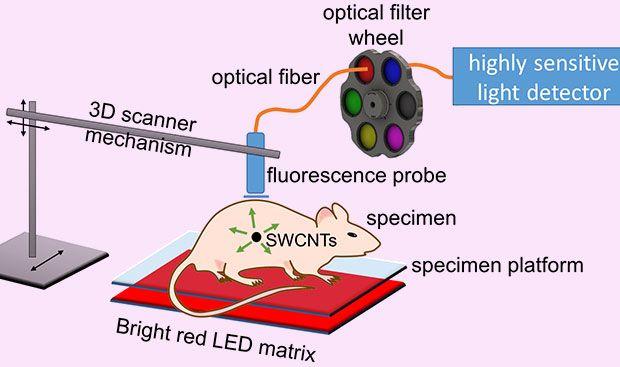 Carbon Nanotubes Reveal Cancer Deep Inside Tissue