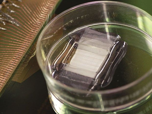 Nanowires Offer Real-Time Monitoring and Control of Heart Tissue