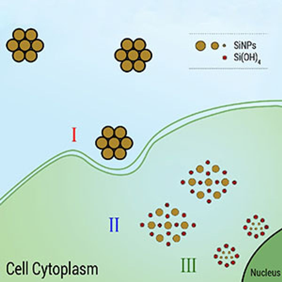 Porous silicon nanoparticles offer harmless theraphy and diagnostic solution for many types of cancer