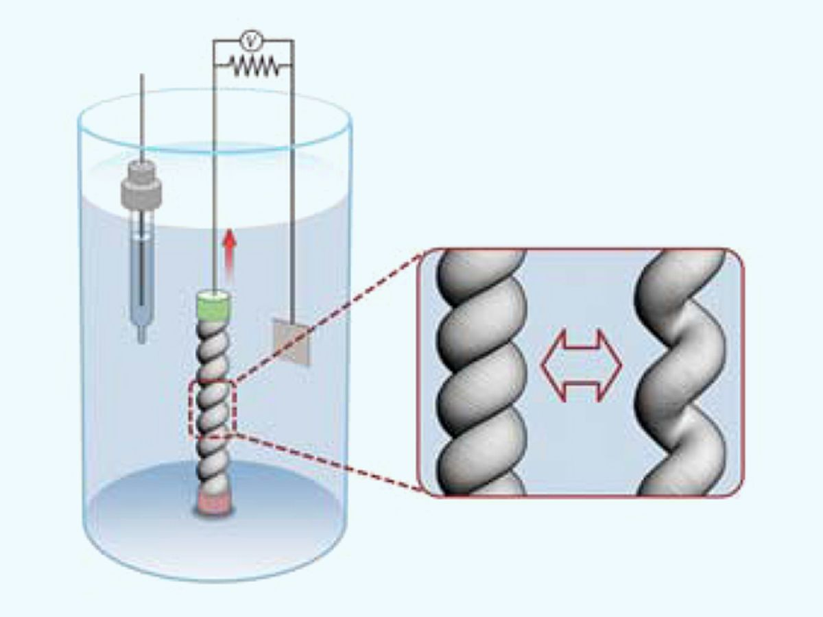 Illustration of a torsionally tethered coiled harvester electrode and counter and reference electrodes in an electrochemical bath, showing the coiled yarn before and after stretch.