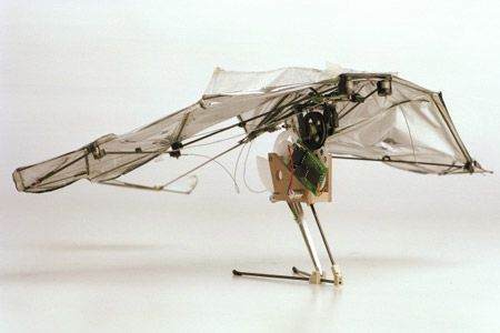 EPFL Looks to Bats, Locusts for Jumping and Gliding Robots