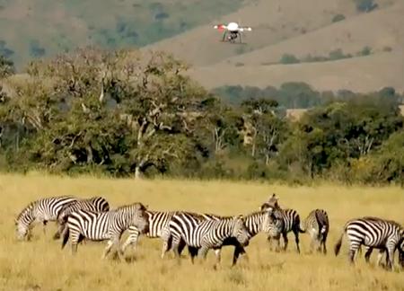 Microdrones Film Confused African Wildlife