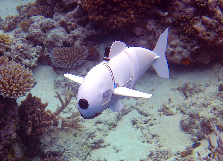 MIT's Soft Robotic Fish Explores Reefs in Fiji