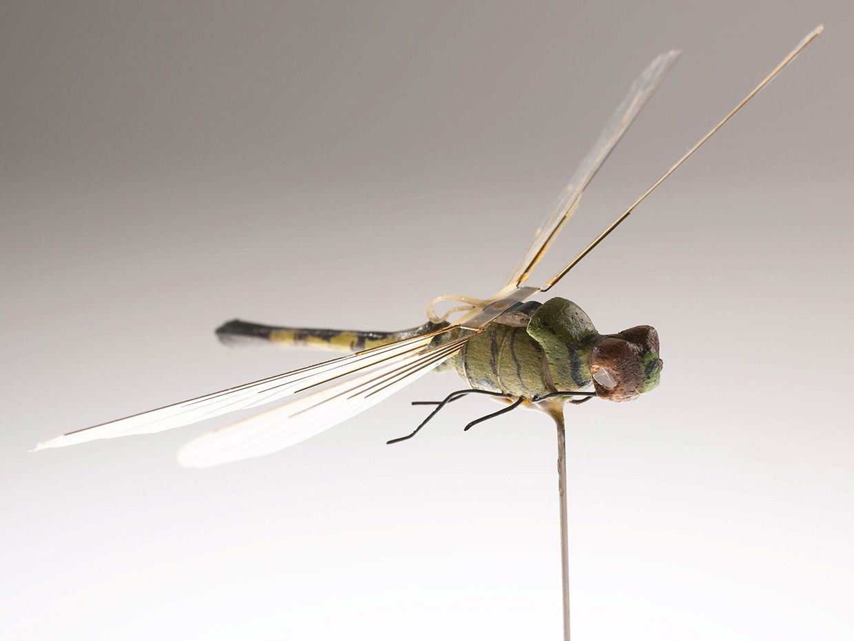 Photo of the Insectothopter.