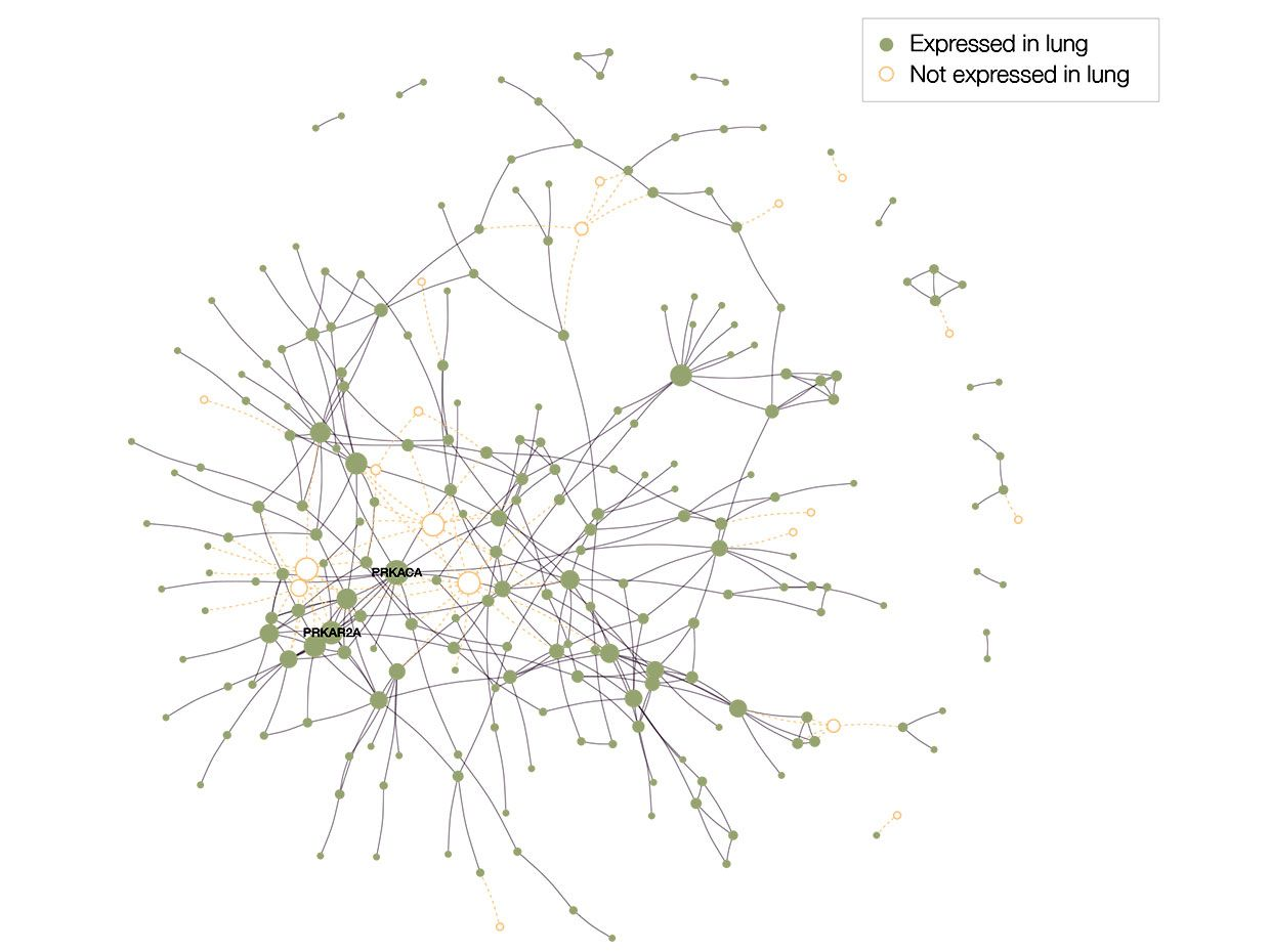 Proteins targeted by SARS-CoV2 are not distributed randomly in the human interactome, but form a large connected component (LCC) consisting of 208 proteins, as well as multiple small subgraphs.