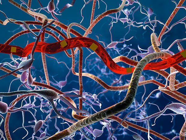 Rendering of the ultra-flexible probe in neural tissue