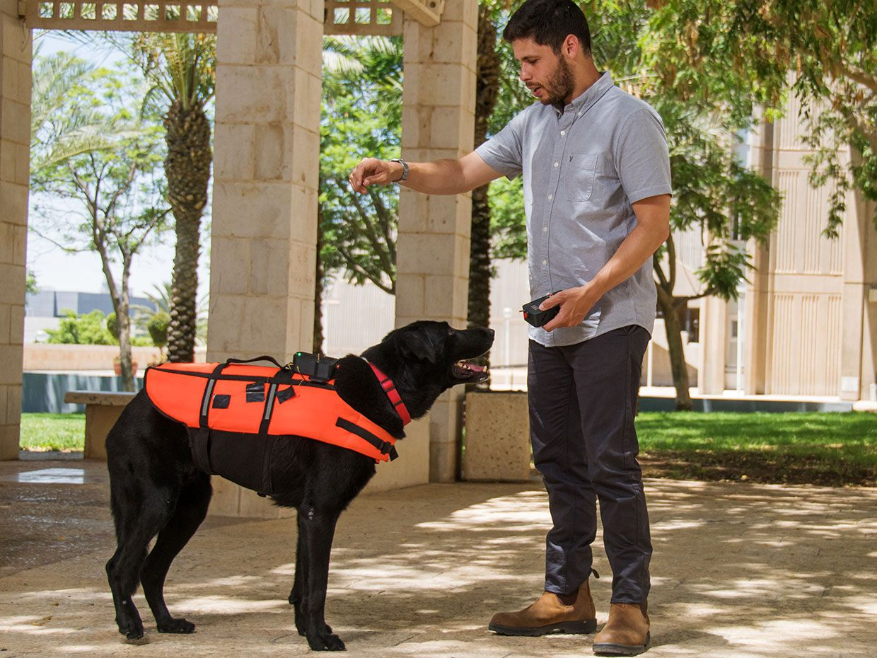 Researcher Yoav Golan holds a remote control while dog Tai, wears the haptic vest.