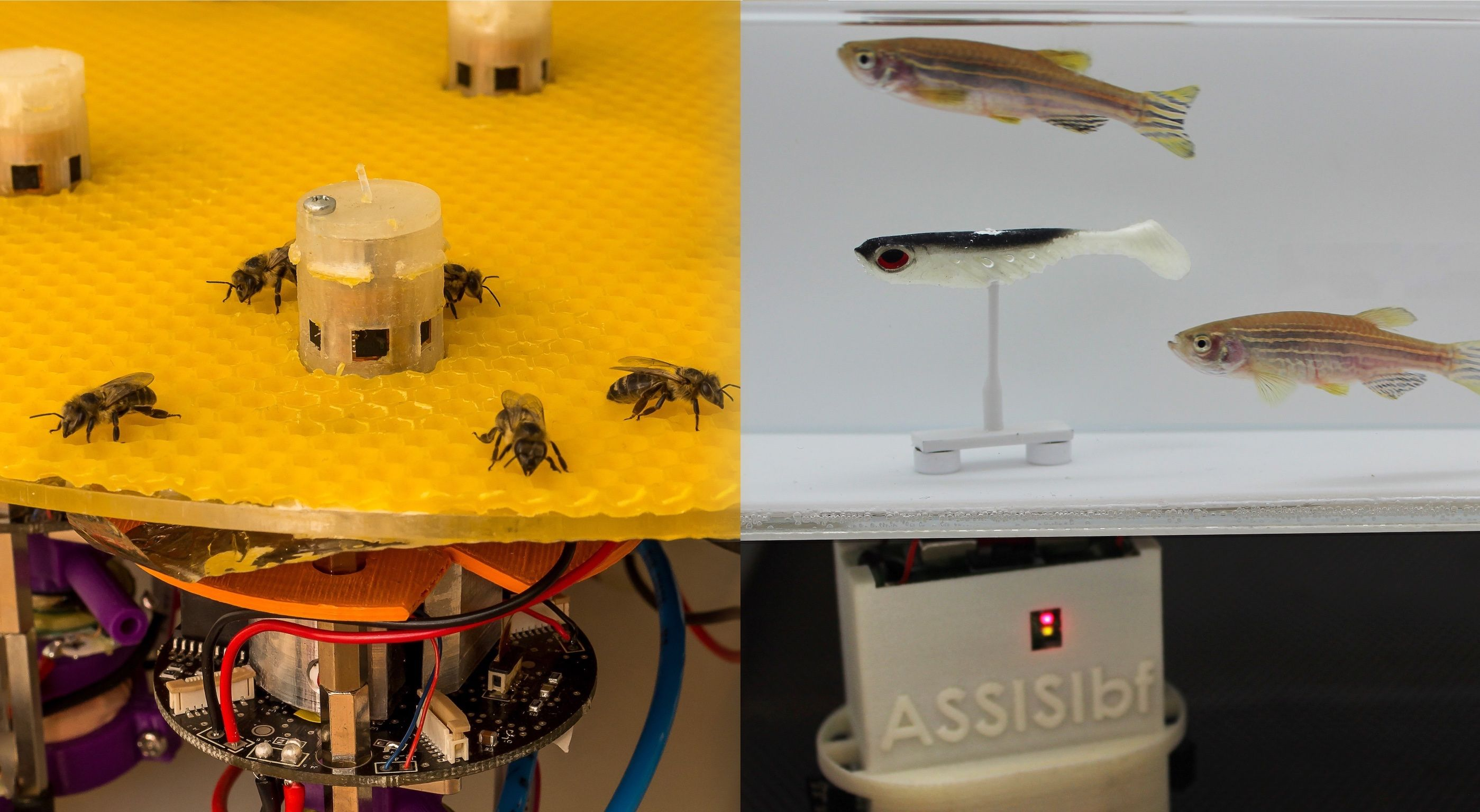 Robots Help Bees Talk to Fish