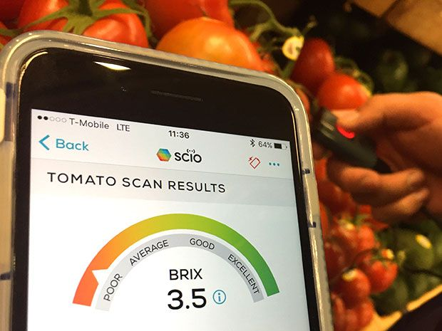 Scanning tomatoes at Whole Foods with the handheld SCiO spectrum analyzer--the system pronounces the quality 'poor'