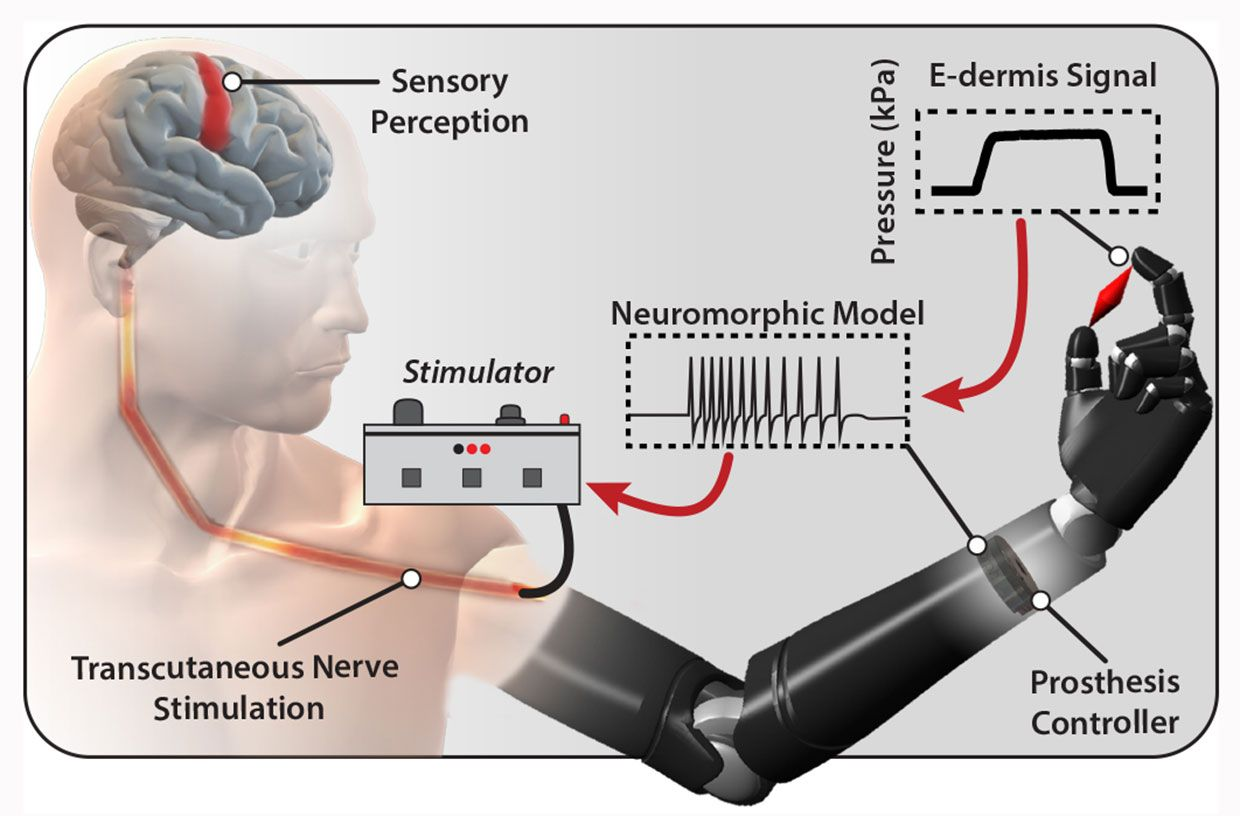 This graphic shows the process by which signals move from the e-dermis to the nervous systems of the wearer.
